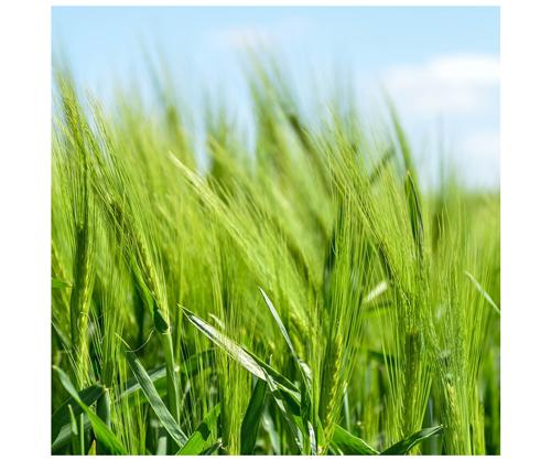 BioWest Ag Solutions - Soil Plant Amendments