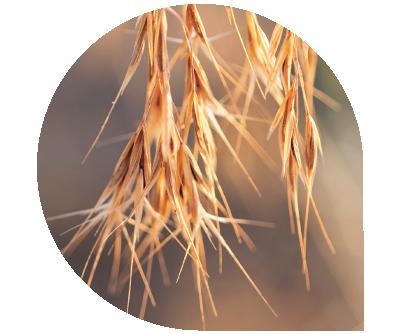 BioWest Ag Solutions - Fertilizers